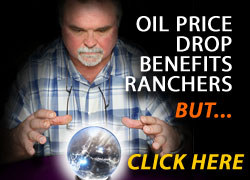 Oil Price Drop Benefits Ranchers, but...  Click for Full Article