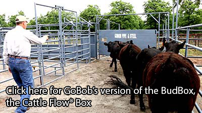 INTRODUCING the Cattle Flow Box