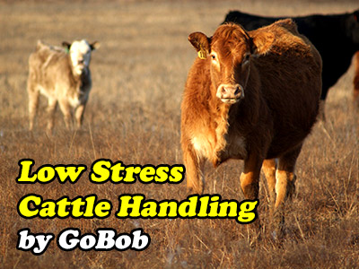 Low Stress Cattle Management